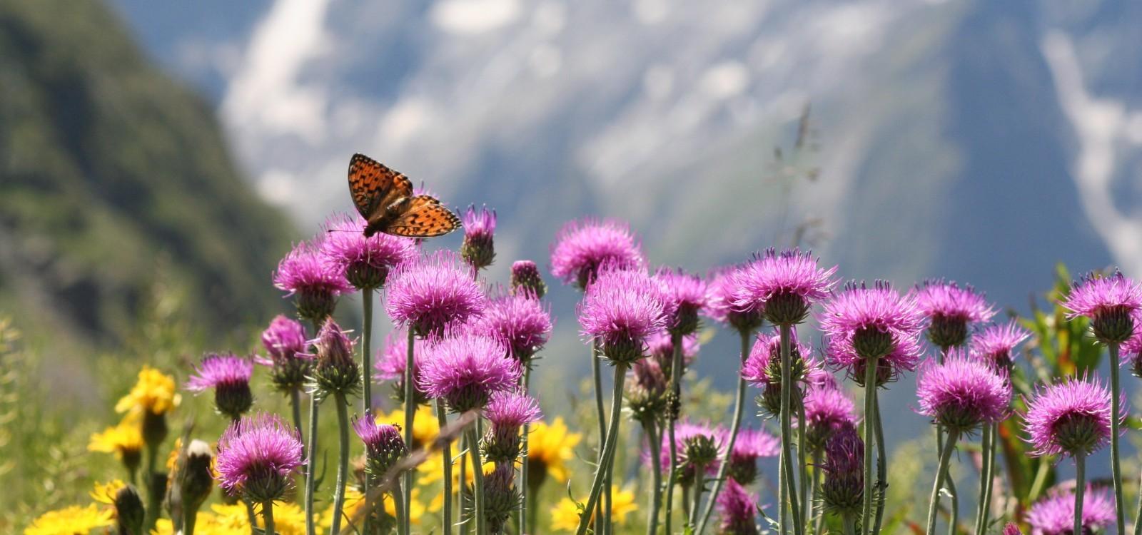 Bergfrühling - Angebote Berchtesgaden