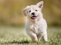 Hund (Anzahl) - auf Anfrage ohne Futter